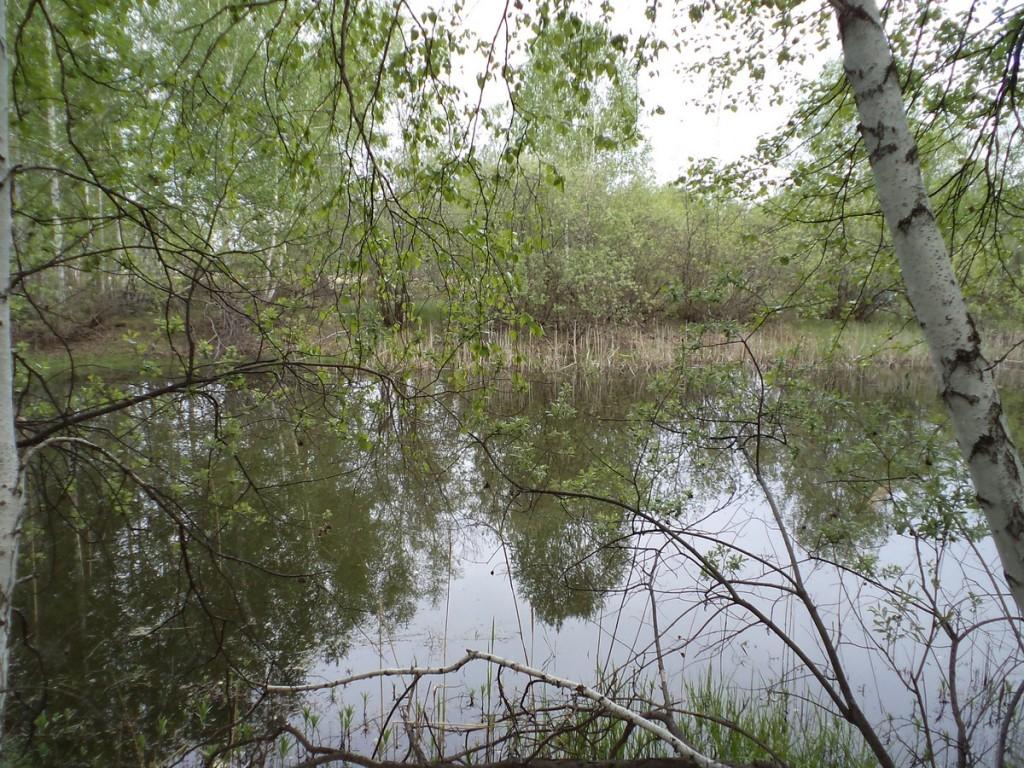 Рыбалка в лесу