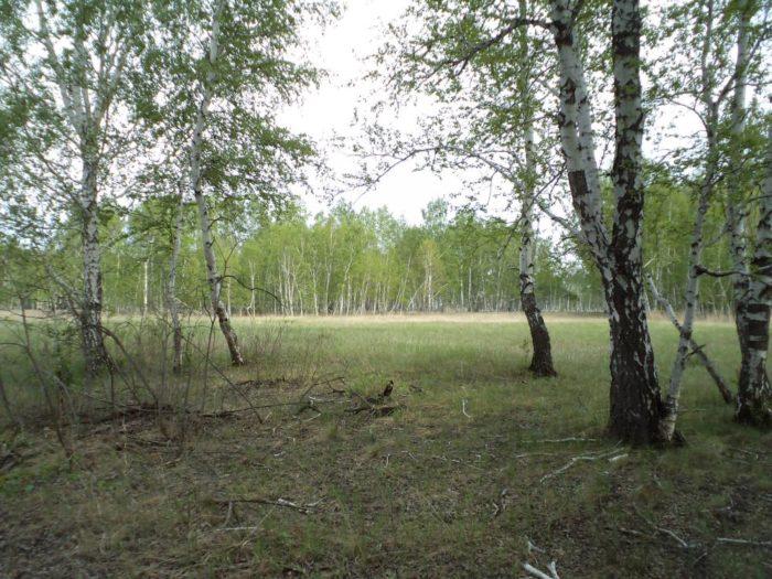 Урочище в лесу