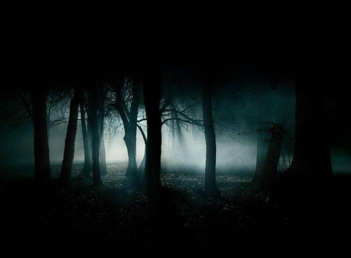 Ночной лес
