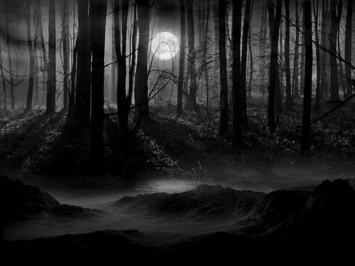Лес в лунном свете
