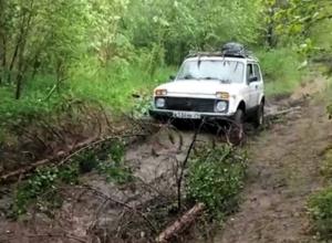 Нива в лесу