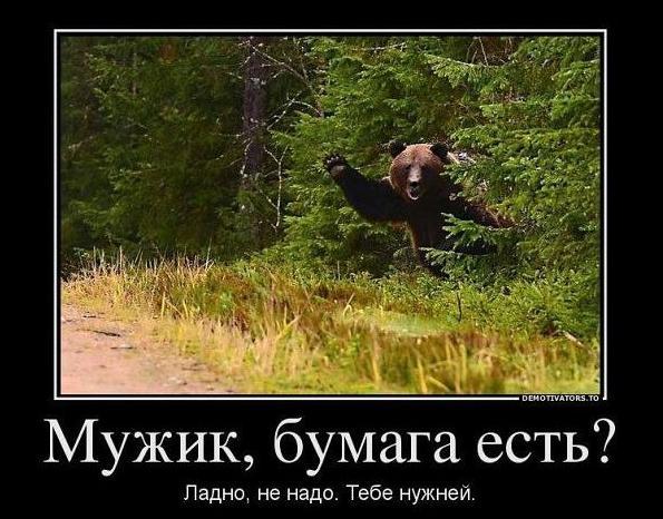 medved-i-bumaga