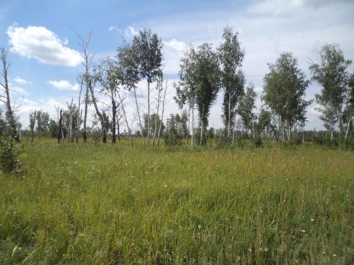 сельское заброшенное кладбище
