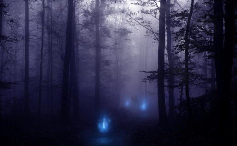 Блуждающие огни в лесу