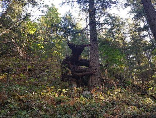 Страшное дерево