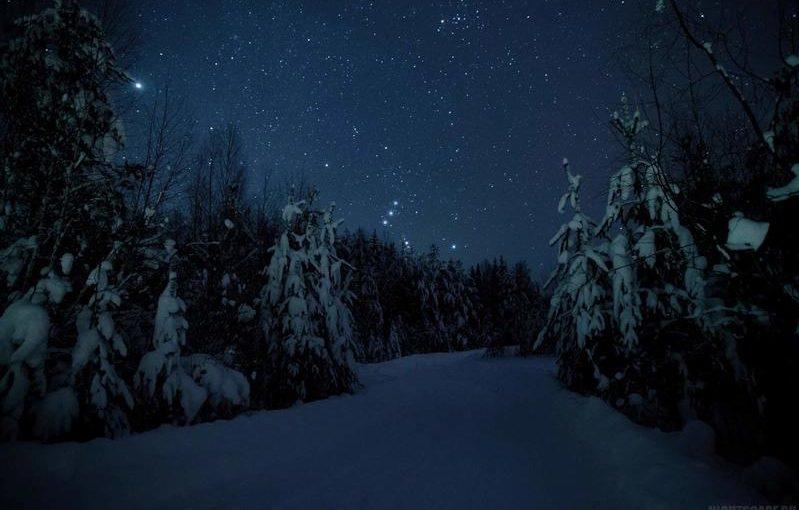 Ночь в зимнем лесу