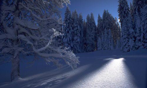 Ночь зимой в лесу