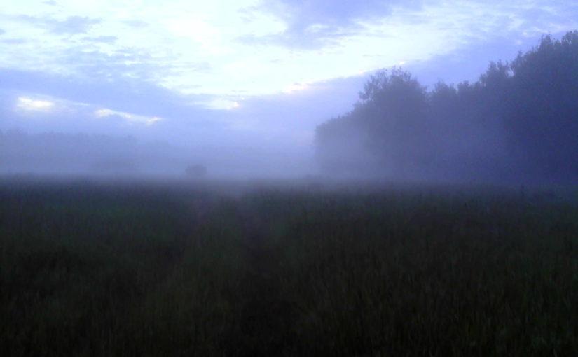 Туман утром